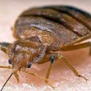 Pest Control Kitchener – What to Look for