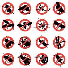 Pest Management in Kitchener