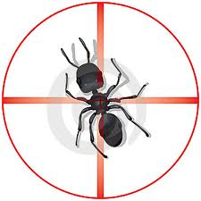 ant control Kitchener Waterloo Cambridge