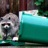 Pest Control Brantford