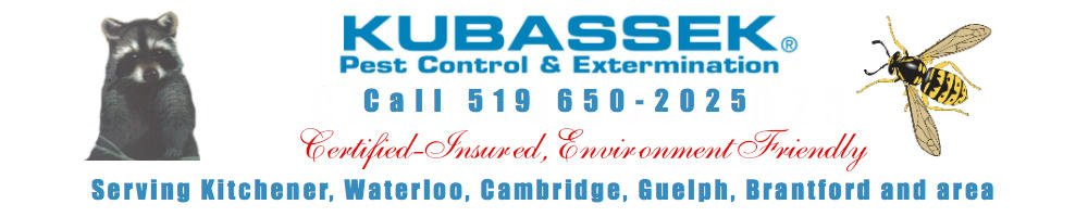 Kubassek Pest Control - Kitchener Waterloo Cambridge Guelph